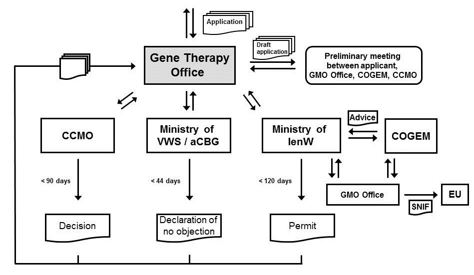 Diagram of procedures and the position of the Gene Therapy Office.